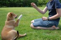 Foto 15 Cani facili da addestrare