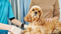 Foto Trapianto di rene nei Cani