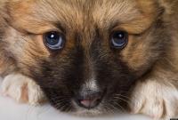 Foto Cucciolo stitico? Cause, rimedi e prevenzione