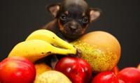 Foto Quale frutta può mangiare il Cane? 14 frutti per Cani