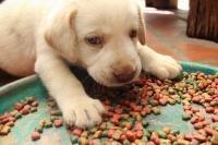 Foto Bisogni nutrizionali del cane: Proteine