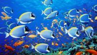 Foto 10 Pesci più belli del mondo