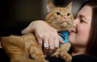 Foto Gatti da terapia: ecco come la gattoterapia ci aiuta a stare meglio