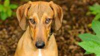Foto 3 Malattie mentali nei Cani