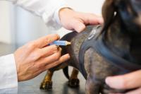 Foto Vaccini del cane ed effetti collaterali