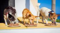 Foto Dieta per Cani malati di fegato