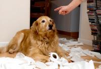 Foto Rimproverare il cane: come e quando