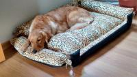 Foto Cuccia per cani: l'importanza di avere un angolo tutto per loro