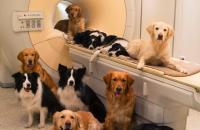Foto Risonanza magnetica per Cani