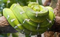 Foto 7 Serpenti più lunghi al mondo?