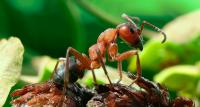 Quanto vive una formica?