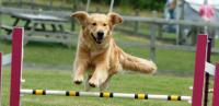 Foto 8 Sport da praticare con il Cane