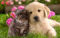 Foto 12 Razze di Cani più affettuosi