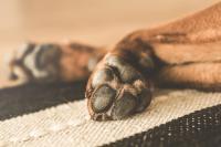 Foto Condroprotettore naturale per Cani