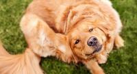 Foto Prove allergiche per Cani: come sono?