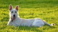 Foto Fistola perianale nel Cane: cause, sintomi e trattamento
