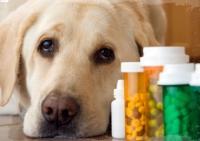 Foto Azatioprina - Farmaci per cani