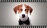 Foto Film con cani: i migliori 10