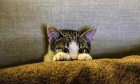 Foto 5 problemi di salute per i Gatti d'appartamento