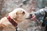 Foto 13 migliori integratori naturali per Cani