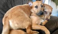 Foto Un Cane incontra il suo gemello e lo fa adottare