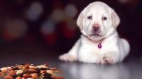 Foto Il Cane può mangiare sale?