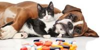 Foto Farmaci proibiti per Cani