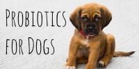 Foto Probiotici per cani con diarrea