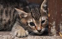 Foto Perchè il Gatto ha il naso secco?