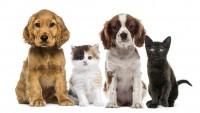 Foto Vietata la vendita di cuccioli sotto i 6 mesi?