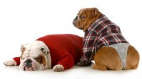 Foto Disfunzione erettile canina: un problema del cane maschio