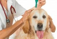 Foto Malattie trasmesse dalle zanzare ai Cani