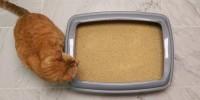 Foto Come fare una lettiera per gatti ecologica