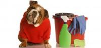 Foto Pericoli della candeggina per i Cani