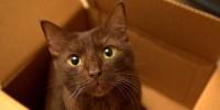 Foto Il pelo del gatto può cambiare colore?