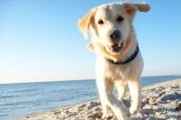 Foto I cani hanno bisogno di una protezione solare?