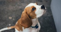 Foto 8 modi per calmare un cane in modo naturale