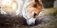 Foto Cibo per cani a base di insetti