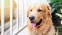 Foto I cani sono animali intuitivi: ecco le prove