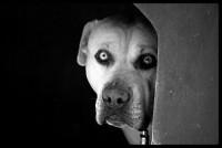 Foto Il sesto senso dei cani