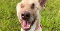 Foto Un cane sopravvive a 17 proiettili e diventa cagna da terapia