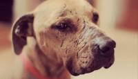 Foto Prendersi cura di un cane maltrattato