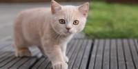 Foto Segni che il Gatto non sta bene