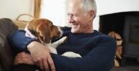 Foto Zooterapia: animali domestici che aiutano le persone