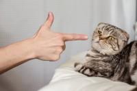 Foto 4 motivi per non sgridare un Gatto