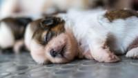 Foto Malattie alle ossa nei cuccioli