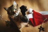 Foto Lo stress natalizio può colpire anche il gatto!