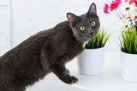 Foto Le orchidee sono pericolose per il Gatto?