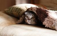 Foto Spruzzare acqua al gatto - Non fatelo mai più!