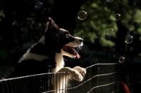 Foto I cani possono vedere al buio?